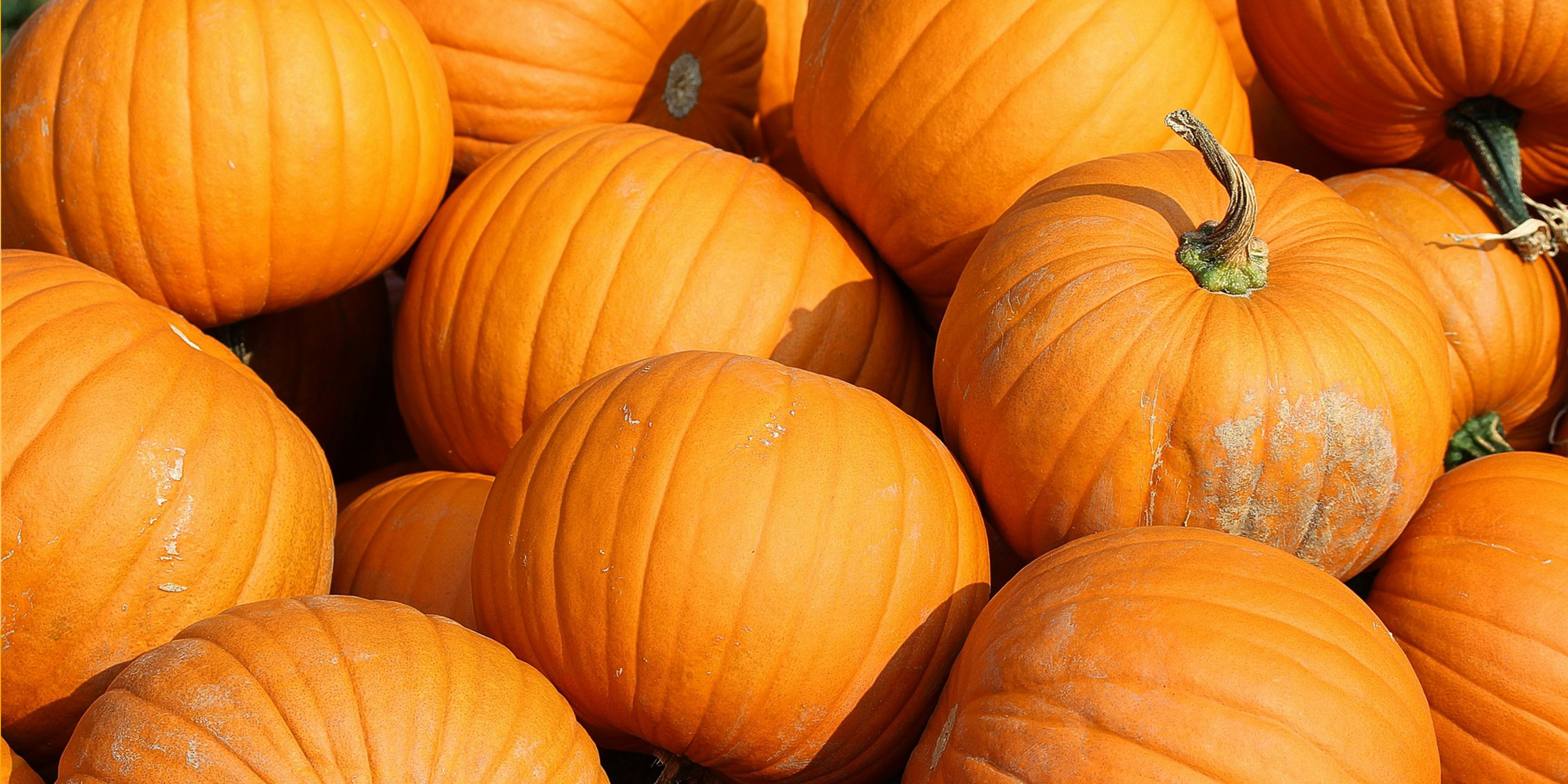 Season fun with science and pumpkins
